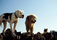 Best in Show: The Movies' Top Dogs