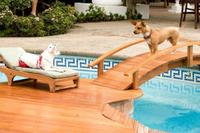 Beverly Hills Chihuahua - Adventure/Comedy - 10/03