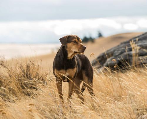A Dog's Way Home | Fandango