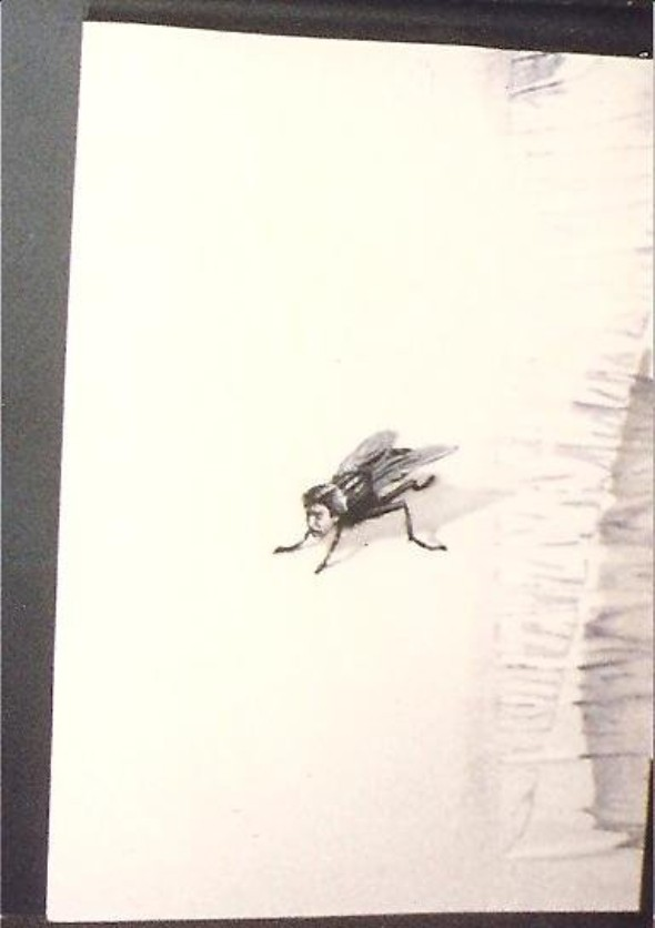 The Fly poster concept art