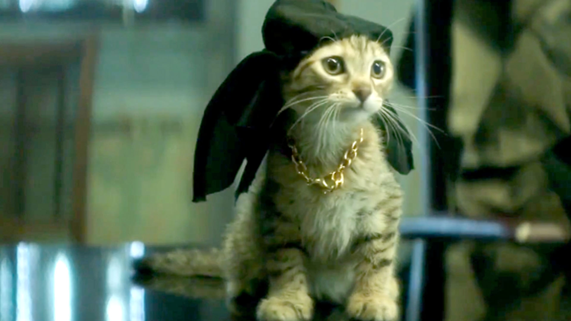Box Office Report Even Adorable Kittens Can T Match Up With The