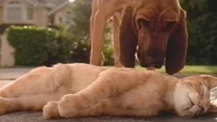 Cats & Dogs Trailer 1