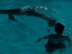 Dolphin Tale: Here You Go Winter, See The Duck?