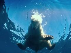 To The Arctic 3D: Life Under Water (Featurette)
