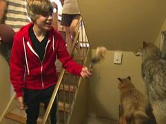 Justin Bieber Never Say Never: Justin And Friends