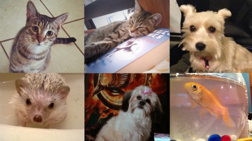 Pets Named After Hunger Games Characters Fandango