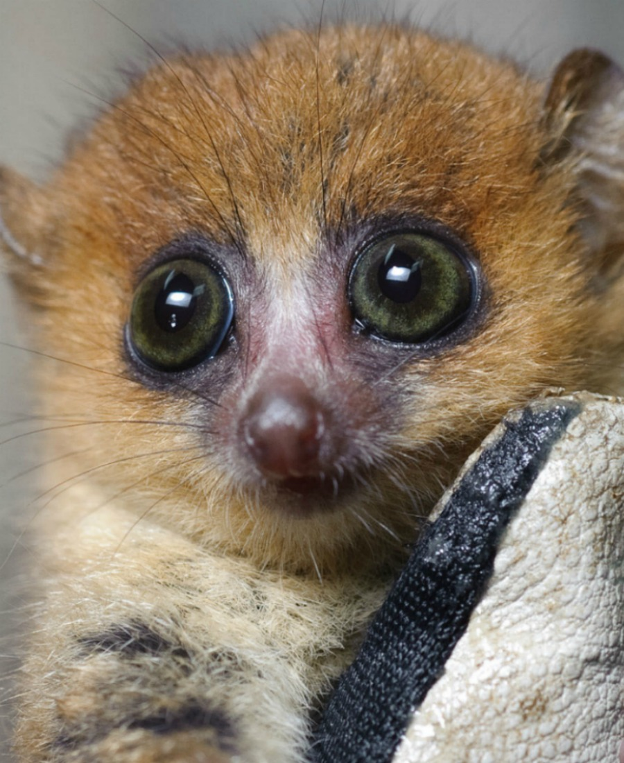 Island of Lemurs: Madagascar is in Theaters