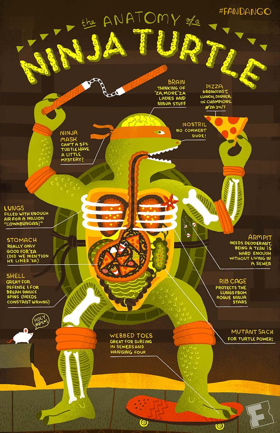 Infographic The Anatomy Of A Ninja Turtle Fandango