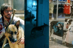 Heroic Dogs in Horror Movies
