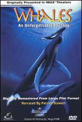 Whales: An Unforgettable Journey showtimes and tickets