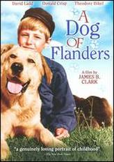 A Dog Of Flanders showtimes and tickets