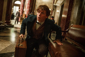 The Wizarding World of 'Fantastic Beasts and Where to Find Them' Dazzles in New Trailer