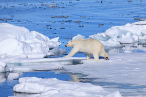 """A scene from """"To the Arctic."""""""