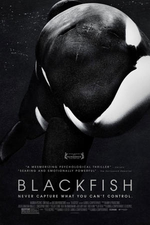 "Poster art for ""Blackfish."""