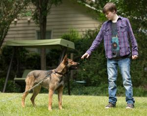 7 Movies that Celebrate the Bond Between Kids and Dogs