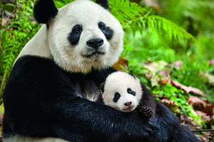 Exclusive: John Krasinski Talks Disneynature's 'Born in China' and Baby Pandas