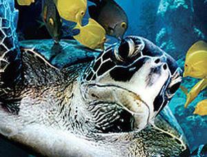 "A scene from ""Deep Sea 3D."""