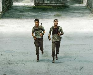 See all the movie photos from 'The Maze Runner'