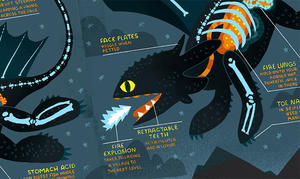 Infographic: The Anatomy of a Dragon