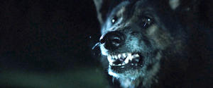 Check out the movie photos of 'The Pack'