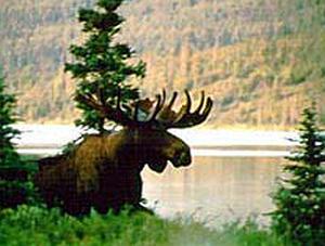 "A scene from ""Alaska: Spirit of the Wild."""