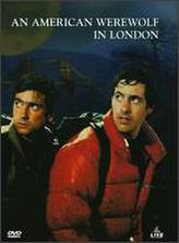 An American Werewolf in London showtimes and tickets