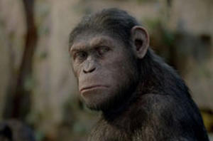 Exclusive Comic-Con Clip: 'Rise of the Planet of the Apes'