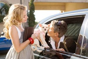 "A scene from ""Beverly Hills Chihuahua."""