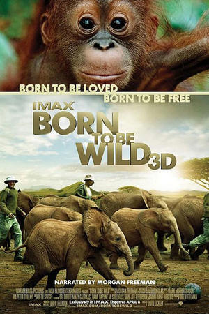 """Poster art for """"Born to be Wild 3D"""""""