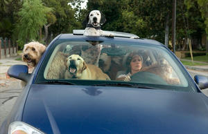 """Molly Shannon stars as a secretary who deals with the loss of a pet in """"Year of the Dog."""""""