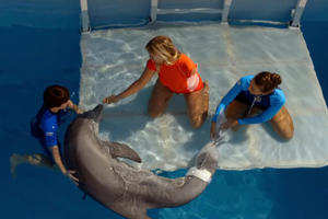 Why We Need More True-Story Sequels Like 'Dolphin Tale 2'