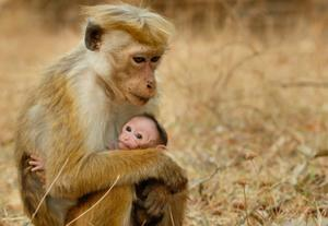 Which Monkey Movie is Right for Your Family?