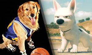 Quiz: Which Movie Dog Is Your Perfect Pet?