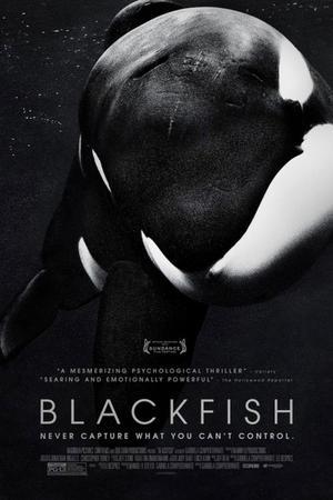 """Poster art for """"Blackfish."""""""
