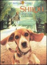 Shiloh showtimes and tickets