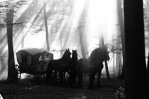 Check out all the movie photos of 'Aferim!'
