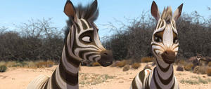 """A scene from """"Khumba."""""""