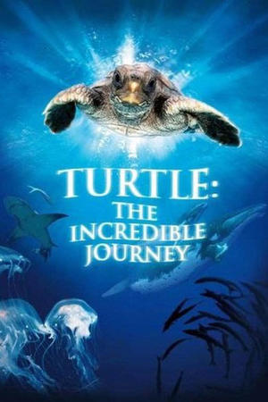 """Poster art for """"Turtle: the incredible Journey."""""""