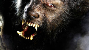'The Wolfman' Howling Again -- Will He Team with 'Dracula'?
