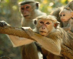 Check out the movie photos of 'Monkey Kingdom'