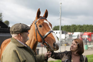 Check out the movie photos of 'Dark Horse'