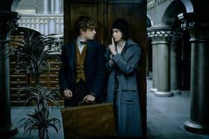 Katherine Waterston Says She's in All of the 'Fantastic Beasts' Movies