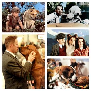 Tissue Alert: Must-See Sad and Silly Dog Movies for Families