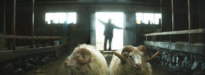 Check out the movie photos of 'Rams'