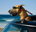 Marmaduke 100 Days Fandango Review