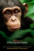 "Poster art for ""Chimpanzee."""