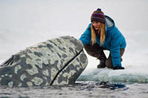 Will 'Big Miracle' Inspire Your Kids?