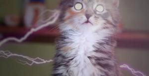 This Video Proves 'X-Men' Is So Much Cuter with Kittens