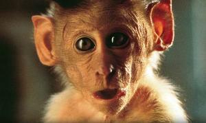 Quiz: What's Your Movie Monkey IQ?