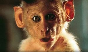 Quiz: What's Your Movie Monkey IQ?